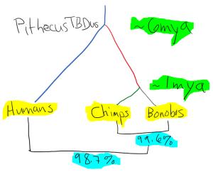 cladistic-diagram